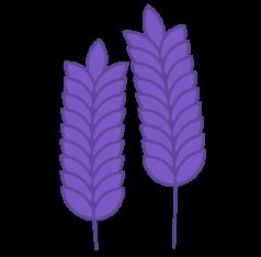 illustration épis blé